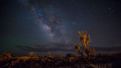 Camp outside in Joshua Tree National park and witness meteor showers on the starry night sky