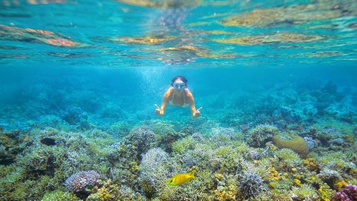 Snorkelling in Moalboal