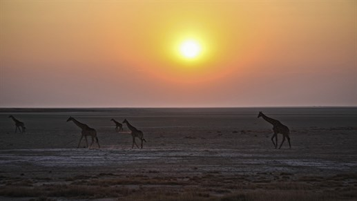 Amazing sunset in the Namib Desert