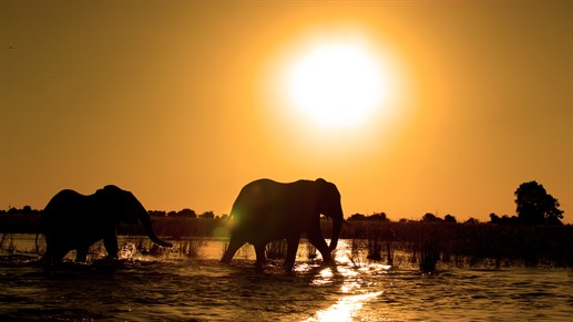 Sunset at Chobe national park
