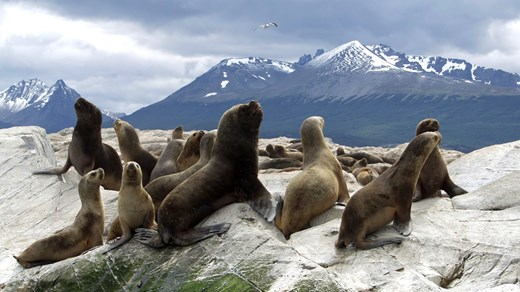 Ushuaia in Argentina has an amazing wild life. Who wouldn't want to hang out with these cool seals?