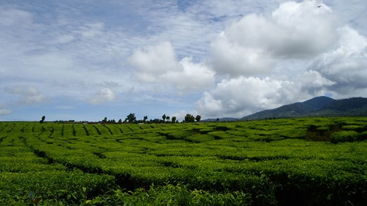 Ricefields and captivating nature in Kerinci, Sumatra