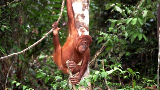 Travel to Malaysia and Borneo with KILROY travels