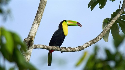 belize-bird-life.jpg