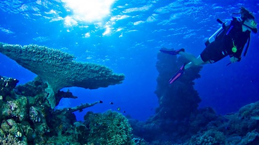 Great Barrier Reef - ultimate diving destination!