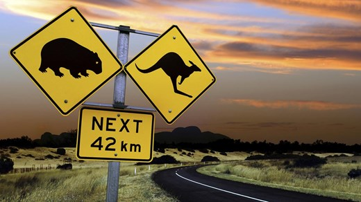 Take a road trip along Australia's East Coast - But be aware of the cangaroos!