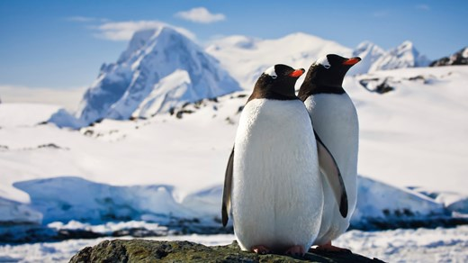 Meet the locals of Antarctica: Penguins