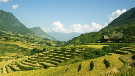 Rice terraces and blue skies in Vietnam
