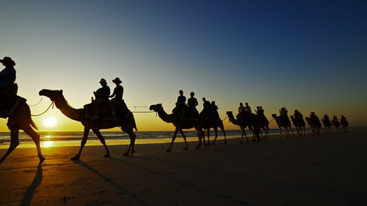 Go camel back riding in the sunset in Broome