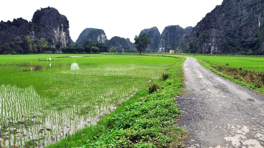 Discover rice fields on an adventure tour in Vietnam with KILROY