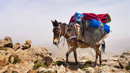 Donkeys also trek in Morocco