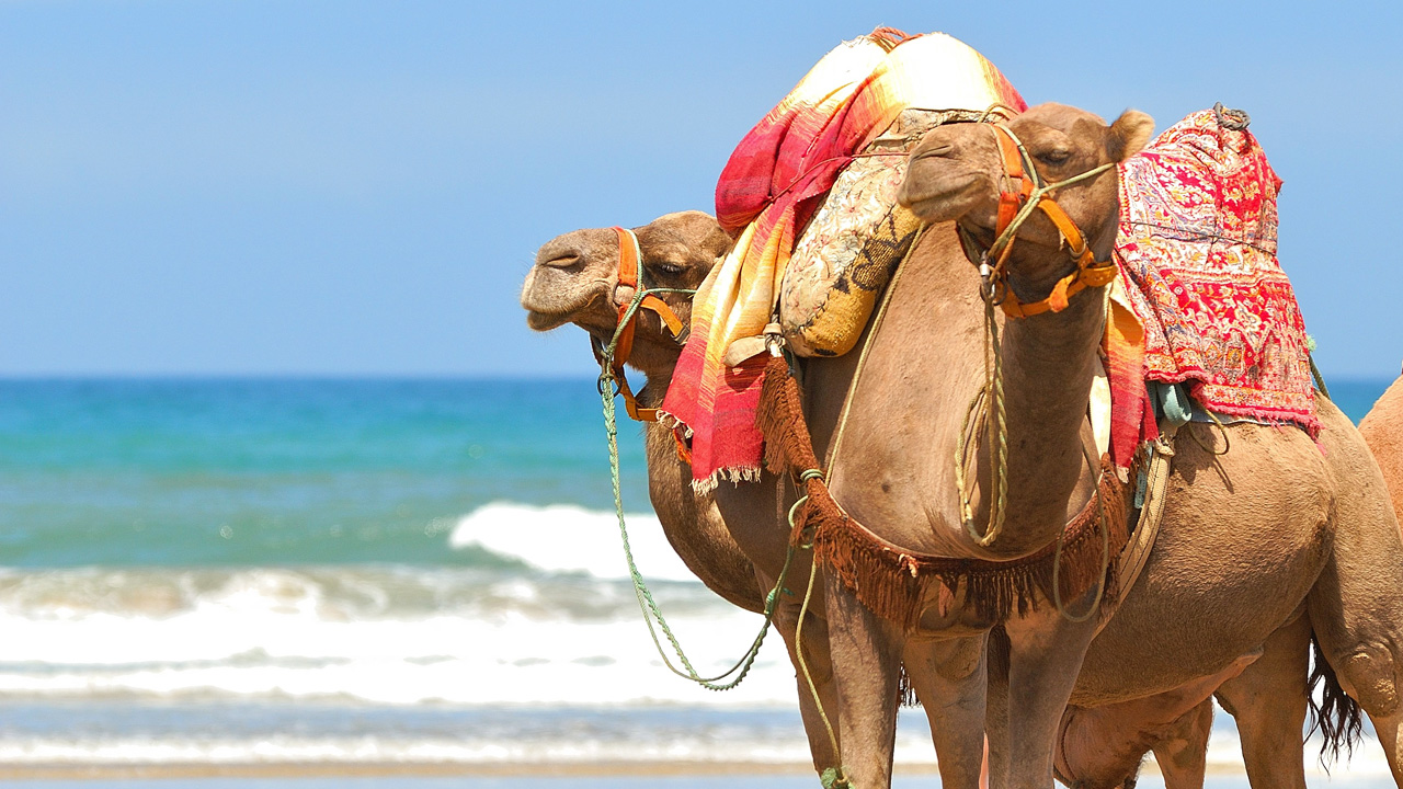 Cheap Travel To Agadir This Is The Place To Surf Kilroy