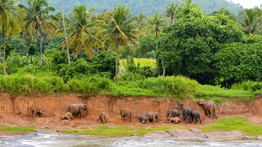 Visit Asian elephants in their natural habitat.