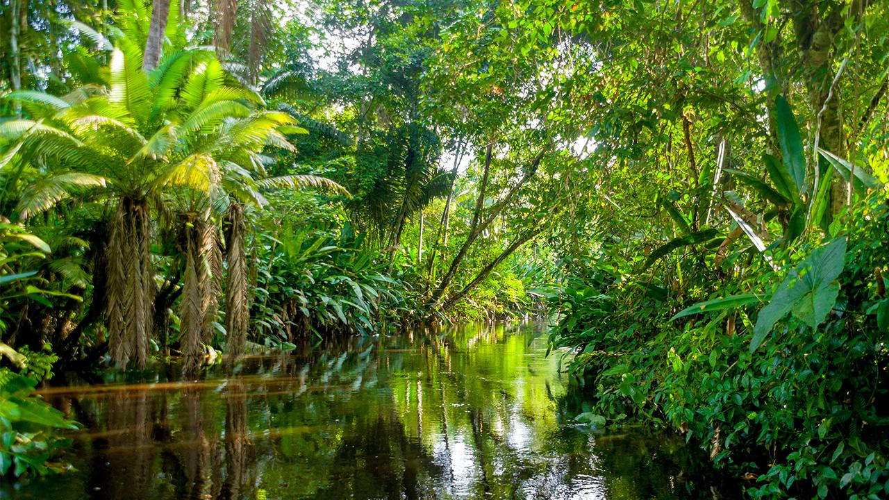 Decor Aquarium Biotop Amazonien