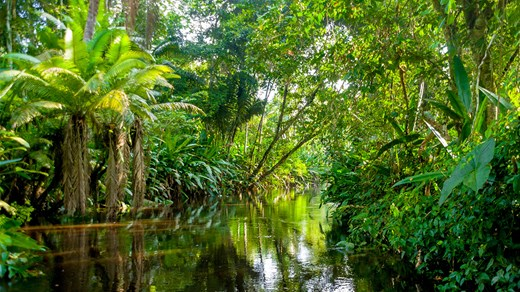 Travel to Brazil and experience the adventure of a life time in Amazonas - the largest rainforest in the world!