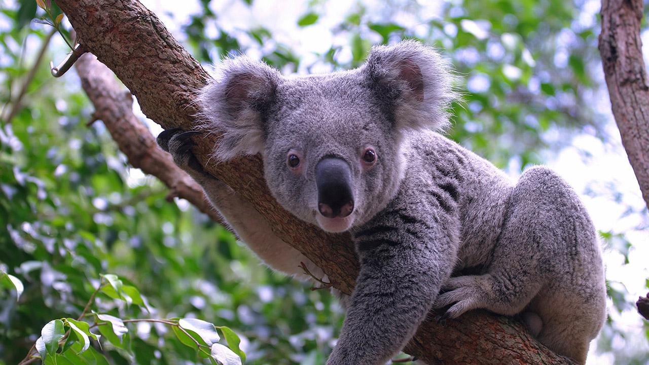 Kilroy Travels Australia