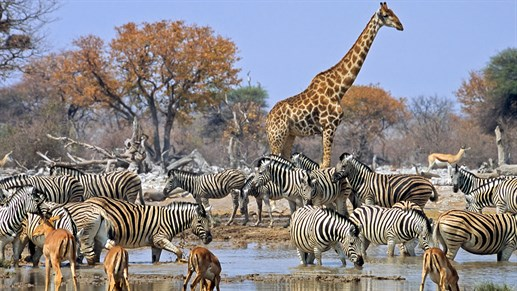 Safari in Etosha National Park in an unforgettable experience