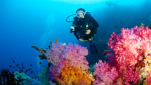 Diving in Fiji is a must do