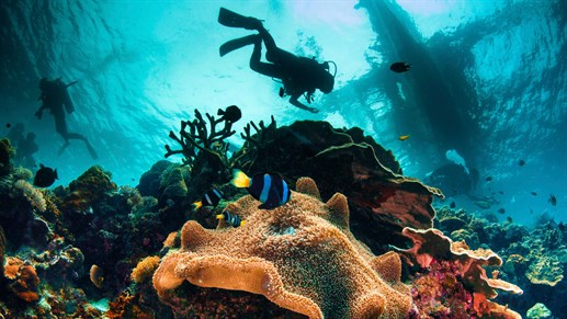 Go diving in the Philippines - KILROY